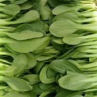 测试——农家的小青菜